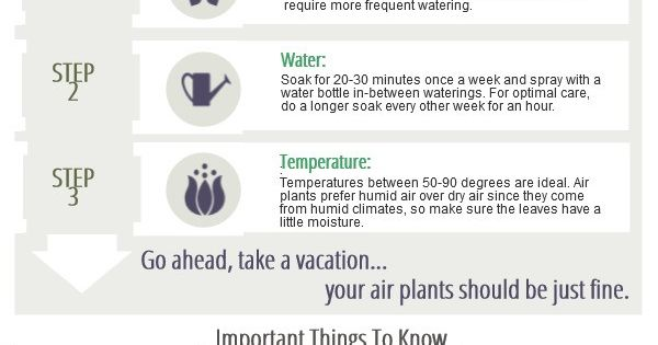Air Plant Care instructions, in an infographic. Easy to ...