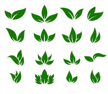 Leaf Icons Vector Design Leaves Green Concept Illustration Isolated Nature Premium Leaf Clipart Leaf Icon Png And Vector With Transparent Background For Free Vector Design Logo Design Video Leaf Clipart