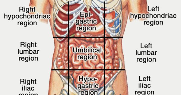 Body systems cavities and anatomy on pinterest