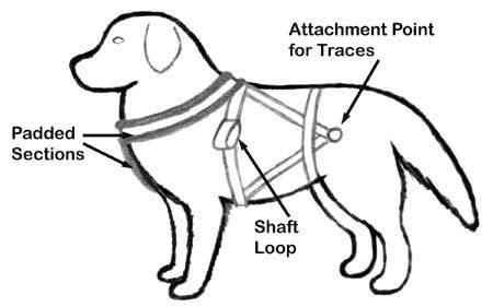 Pin On Collars And Harnesses