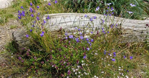 Totholz Als Gartenmobel Wildbienenschutz Im Naturgarten Garten Naturgarten Waldgarten