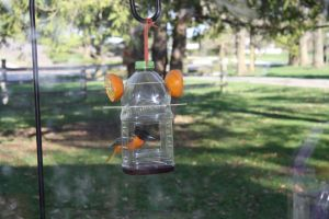 Oriole Feeder Upcycle Reuse Diy Whatever You Call It Oriole Bird Feeders Bird Feeders Oriole Bird
