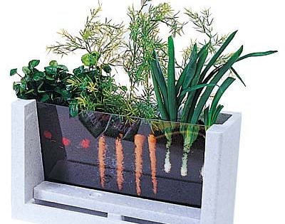 Watch Your Veggies Grow! Indoor Gardening. Kids too!