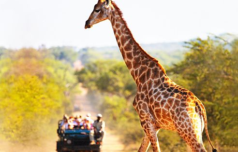 I still cannot believe that I will be on a safari in