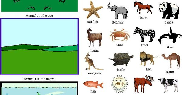 zoological classification of animals pdf