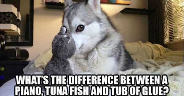 Pun dog difference between a piano tuna fish and a tub for Is tuna fish good for dogs
