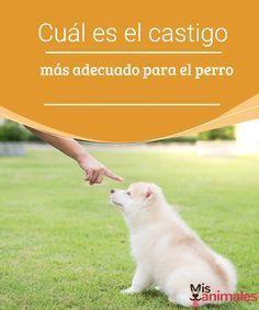 Tipos De Collares De Castigo Para Perros Cual Es El Castigo Mas Adecuado Para El Perro Querer Que Nuestro