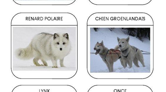 Imagier des animaux polaires page 4 espace pole nord - Animaux pole nord ...