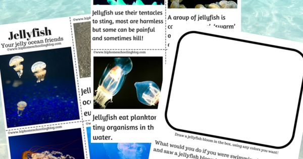 Jellyfish Free Printable Book and Activity plus craft ...
