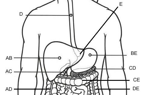 practice labeling the organs of the digestive system