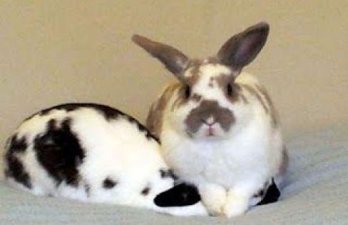 Pin On Rabbit Houses