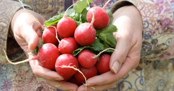 1 Naturally Cooling Radishes Are A Naturally Cooling Food And Their Pungent Flavor Is Highly Regarded In Eastern