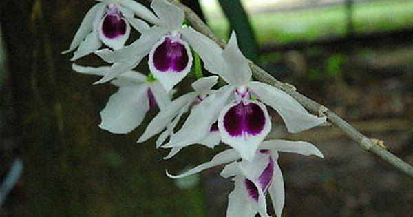 Pin On Orquideas