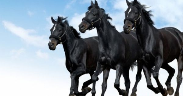 At Resimleri En Guzel At Resimleri Masaustu Fotograflari Siyah Atlar Atlar Vahsi Hayvanlar