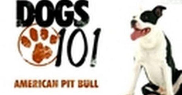 Are Pit Bulls Perfect Pets Dogs 101 Pitbulls Dog Poems