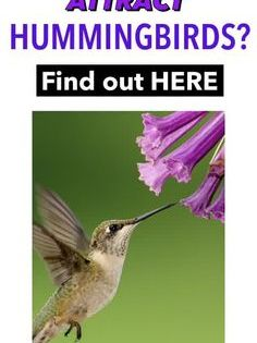 28 Common Flowers That Attract Hummingbirds Native Easy To Grow Bird Watching Hq Flowers That Attract Hummingbirds How To Attract Hummingbirds Humming Bird Feeders
