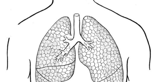 Coloring page lungs Preschool Pinterest