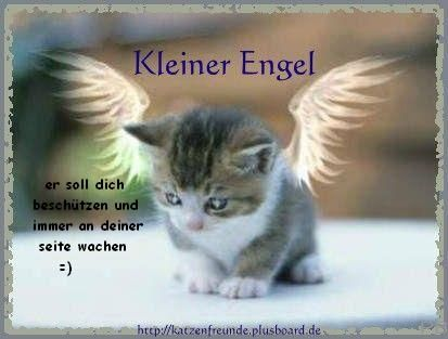 Engel Bild Lustige Bilder Spruch Katze Und Kleiner Engel