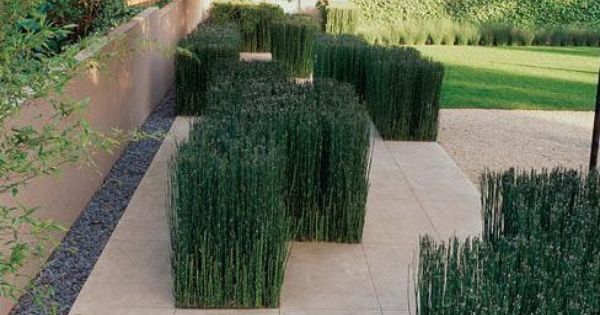 Designing with native plants northern virginia landscape for Landscape design northern virginia