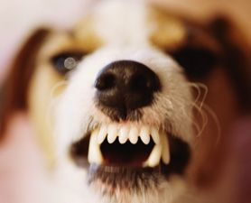 6 Reasons To Upgrade To Rebelmouse From Wordpress Agressive Dog Dog Behavior Problems Aggressive Dog