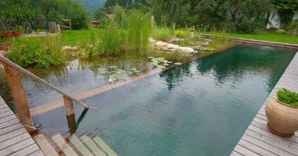 natural pools... swimming pool is built within a pond that holds water