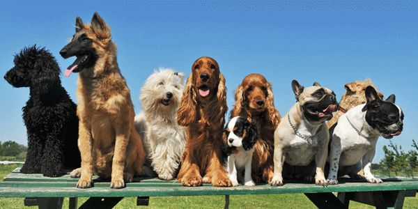 What S Your Inner Dog Breed Dogs Dog Breed Selector Purebred Dogs