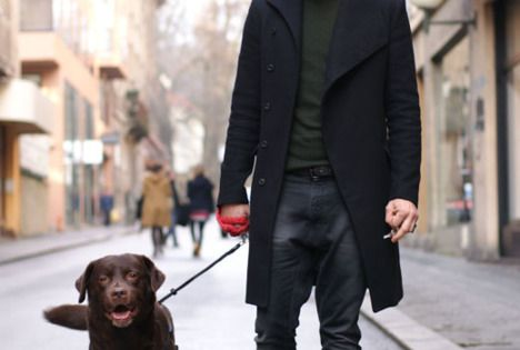 knit cap / coat / dog. I liked the chocolate lab as