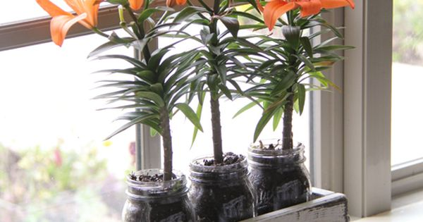 Mason jar planter idea