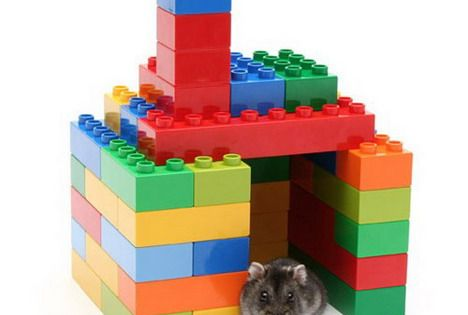 Top 20 Most Creative Uses Of Lego Hamster Toys Baby Hamster Hamster Bedding
