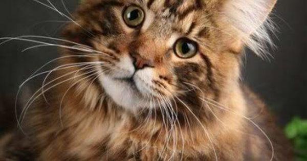 Cat - fine image