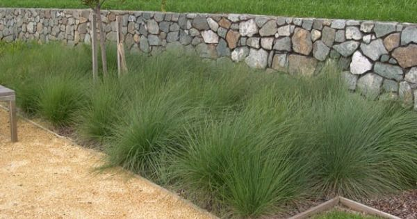 how to grow grass in sandy soil