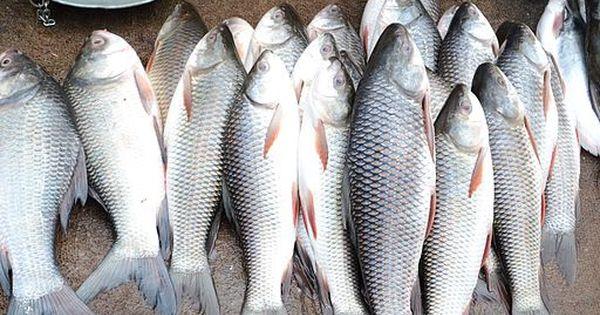 Urine Smells Fishy Signs Of A Health Problem Lorecentral Urine Smells Fishy Urinal