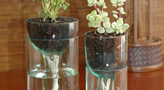 Self-watering planter made from recycled wine bottles. @Lisa Heyer - For Recycled
