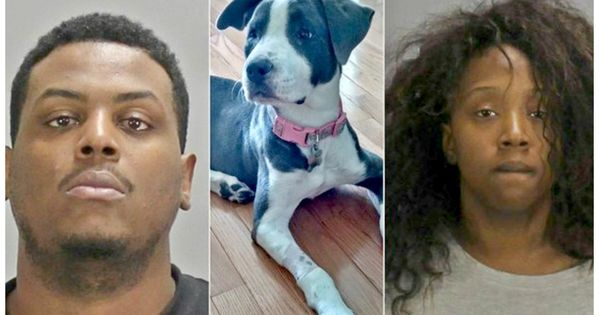 Petition Sanction Georgia Couple That Whacked Pet Dog Repeteadly