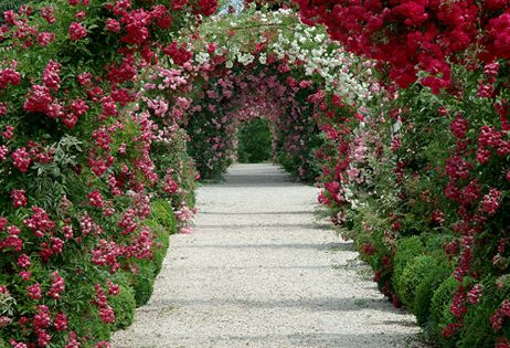 Arched Flowering Pathways