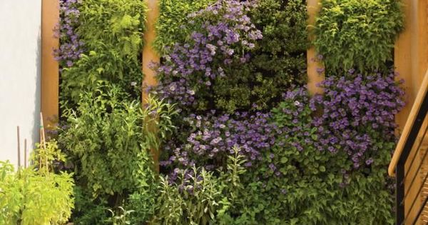 Really like the idea of having a 'living wall'. It creates nice