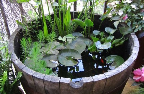 Outdoor goldfish containers google search garden for Goldfisch miniteich