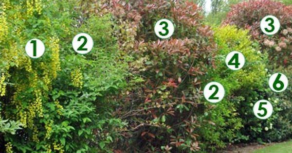 Une haie champêtre très décorative (Scènes de jardins ...