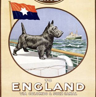 Pin By Cheryl Page On Vintage Scottie Westie Illustrations Ads