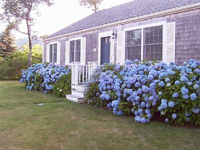 No Such Thing As Too Many Hydrangeas Garden Front Of House House Hydrangea House Landscape