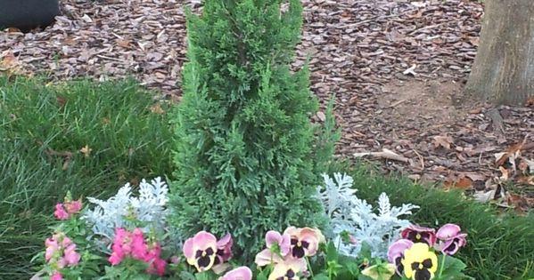 rosemary containoer garden