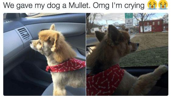 Pin By Olivia On Lolanimals Funny Dog Memes Funny Animals Funny Animal Pictures