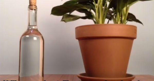 L 39 astuce de g nie pour arroser ses plantes quand on part en vacances c - Comment bien arroser ses plantes ...