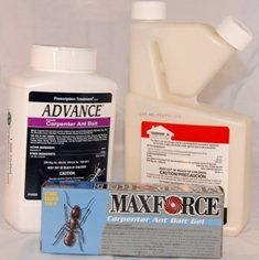 Carpenter Ant Control Kit With Termidor Kit1034 Click On The Image For Additional Details Pest Control Pest Control Supplies Ant Control