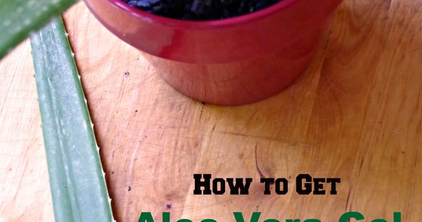 how to take aloe vera gel from the plant