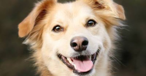 When Dogs Look Like Theyre Smiling Are They Smiling