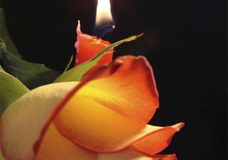 Pin By Amanda S Blog On Home Decor Candles Rose Candle
