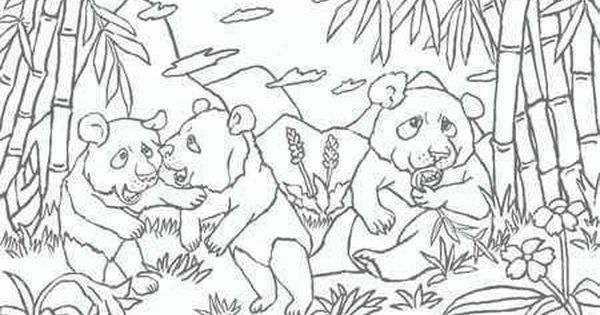 Baby Panda In The Bamboo Forest Coloring Page Panda Coloring Pages Forest Coloring Pages Coloring Pages For Kids
