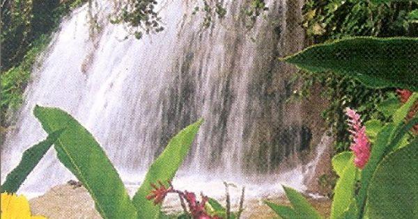 enchanted garden in jamaica rapunzel at large