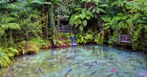 Rotorua, New Zealand - by Altus Wilder NewZealand